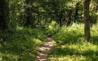 Ruta guiada por el bosque-isla de Estíbaliz (domingo 21 de octubre)